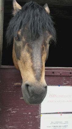 Greco Horses, Animals, Animaux, Horse, Animal, Animales, Animais