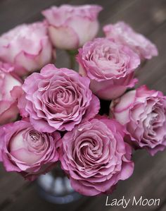 Lady Moon Roses