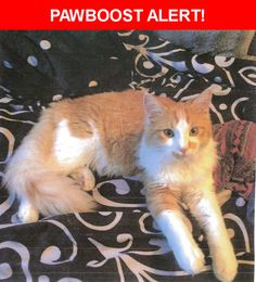Is this your lost pet? Found in Littleton, CO 80129. Please spread the word so we can find the owner!  Description: Orange and white long hair cat with long bushy tail.  No collar or microchip.   Nearest Address: West Highlands Ranch Parkway, Highlands Ranch, CO, United States
