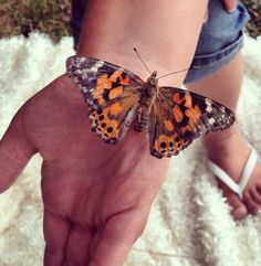 Be gentle with your butterflies! Upon release, many will choose to stick around to say goodbye before flying away! Thank you Aubrey Budzyn Hallinan for a fantastic photo!