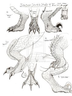 How To Draw Dragon Claws Jiragon arm and claw sketches... Close to lizard drawing :)