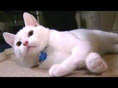 Community: Kitten Born Without Leg Bones Gets A Boost