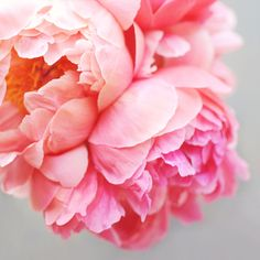 gorgeous peonies print by Creature Comforts