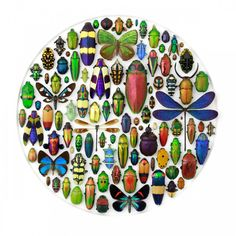 pheromone-design-christopher-marley-insects-series-6