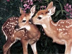 deer, animal, and bambi image Nature Animals, Animals And Pets, Beautiful Creatures, Animals Beautiful, Beautiful Images, Cute Baby Animals, Funny Animals, Tier Fotos, Cute Little Baby