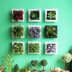 Image result for how to design succulents in a wall frame