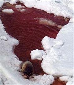 Caccia alle foche!
