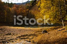 Autumn At The Yedigoller National Park royalty-free stock photo