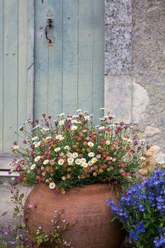 Garden Cottage, Garden Pots, Dog Garden, Terrace Garden, Edible Garden, Herb Garden, Beautiful Gardens, Beautiful Flowers, Flowers Wallpaper