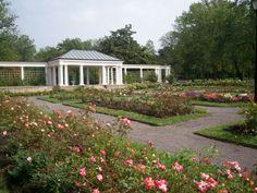 rose garden  delaware park