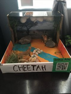 Cheetah habitat diorama no fancy materials just a shoe - Schulprojekte ideen ...
