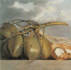 """Cocos"" olio su tela Albert Eckhout, (Groningen, Olanda Museum of Copenhagen Albert Eckhout, National Museum, Botanical Illustration, Vintage Black, Art History, Still Life, Oil On Canvas, Coconut, Artsy"