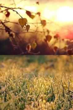 "photoholic: "" Golden Frost (by Rachel) """