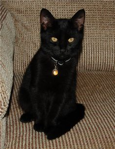 Black cat wearing witchy amber pendant.