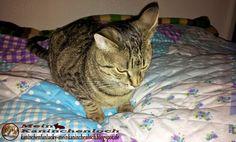 Kaninchenfan Lucky - Mein Kaninchenloch: i go to work now and Schnucki is sleeping like every day (^_~)  #cats #katzen #neko #chat   http://kaninchenfanlucky-meinkaninchenloch.blogspot.de/2014/09/i-go-to-work-now-and-schnucki-is.html