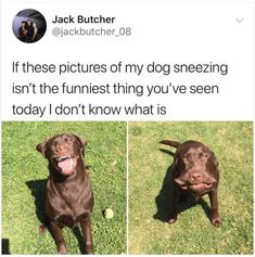 Ridiculous Animal Picdump of the Day 67 (25 Pics) - RidiculousPics #funnymemes #funnypictures #humor #funnytexts #funnyquotes #funnyanimals #funny #lol #haha #memes #entertainment