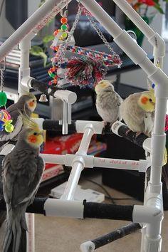 Pet Bird DIY Ideas...  PVC home build bird play gym.