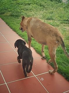 Day 3: exploring the garden with my big sister from another island. As long as you have a loving home, it's not bad being a Caribbean dog.