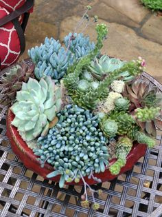 1000 images about succulents on pinterest succulent plants succulent containers and nurseries - How to make a succulent container garden ...