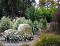 Chatham Is Nikau underplanted with mainly NZ natives Designed and