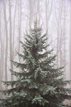 The perfect Christmas tree!  Splendid Sass: PINTEREST AT CHRISTMASTIME ~ PART IV