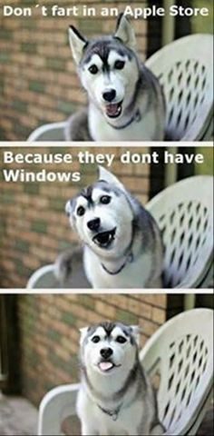 funny dog memes: apple store no windows