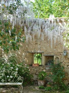 magnifique glycine blanche