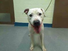Urgent Part 2 -Urgent Death Row Dogs.      My Name is Fido -my Anima ID A-0986703. I' m a Pitt bull mix  5 years.       TO BE DESTROYED. 12/20/13.                     PLEASE help.