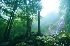 A tropical forest in Sanya. #sanya #whererefreshingbelongs #naturalbeauty