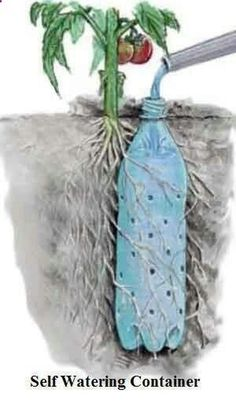 Bottle Drip Feeder for Plants - Water Plants with a Soda Bottle Underground Self Watering Recycled Bottle System - Potted Vegetable Garden Lif.Underground Self Watering Recycled Bottle System - Potted Vegetable Garden Lif. Organic Gardening, Gardening Tips, Gardening Vegetables, Organic Farming, Gardening Services, Gardening Quotes, Urban Gardening, Indoor Gardening, Companion Gardening