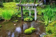 南禅寺 大寧軒 苔と青もみじ 京都の三柱鳥居と水と緑の庭園