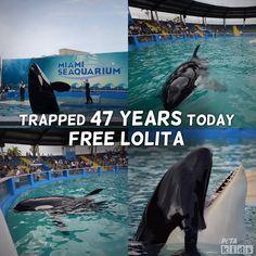Free Lolita! #teachkindness #animalsarenotours