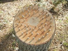 If you've cut down trees and have stumps in your yard, forget about grinding stumps, grow mushrooms on them!  Stumps are great for growing mushrooms because the roots are still in the ground which keeps the stump hydrated for a long time. Once the stump is colonized by the fungus it can produce for 5-10 years #mushroomgrowing