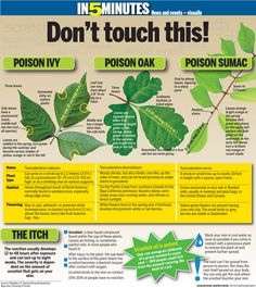 Don't touch this! You may not know you have made contact with poison ivy, poison oak or poison sumac until it is too late. The reaction usually develops 12 to 48 hours after exposure and can last up to eight weeks. Survival Life Hacks, Survival Tips, Survival Skills, Wilderness Survival, Poisonous Plants, Medicinal Plants, Permaculture, Poison Ivy Plants, Plant Identification