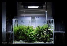 Some amazing aquascapes - Green Aqua Showroom