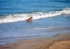 Nags Head Beach, North Carolina
