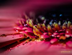 Pink World by Claudia Samples on 500px