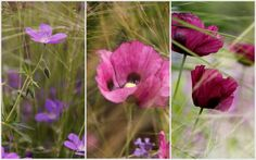 Lovely blog post by Gillian, course attendee In June 2014. Flower Photography, Photography For Beginners, Grass, June, Cottage, Garden, Flowers, Plants, Blog