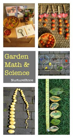 Outdoor math activities and backyard science experiments - great for forest school or a school gardening club
