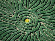 Aerial of Corn Maze in Denver Botanic Gardens, Denver, USA: 18x24 Photographic Print