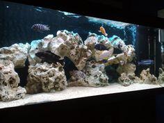 rock cichlid tank
