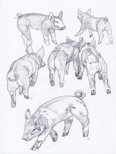 the best animal art Pig Drawing, Anatomy Drawing, Anatomy Art, Pig Illustration, Pig Art, Art Watch, Baby Animals, Draw Animals, Funny Animal Videos
