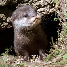 Who are you, and what do you want? I love to watch otters, this one is sooo cute!