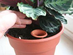 Olla - Pots d'Irrigation pour Planter 6-8 pouces #potgardenforbeginners