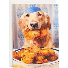 Hanukkah is a special celebration to share with friends, community, and family. Check out these cute Hanukkah dogs! Hanukkah Cards, Christmas Hanukkah, Dog Pictures, Cute Pictures, Seattle Dog, Hanukkah Traditions, Happy Hannukah, Jewish Humor, Festivus