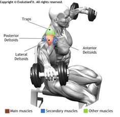 SHOULDERS -  SEATED SIDE LATERAL RAISE Remarkable stories. Daily