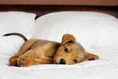 I sleeps here woof you