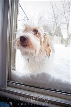 Hahaha, just look at those eyes! (http://scruffydogphotography.com) #dog #animal #creature #nature #snow #winter #cold #window #door #funny #humourous
