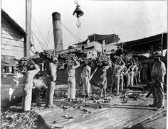 Loading bananas, Port Antonio, Portland, Jamaica [circa 1920]