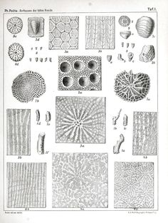 Science - Gems and minerals - Fossils - Educational plate -Pattern 2